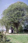 Die Rochuskapelle
