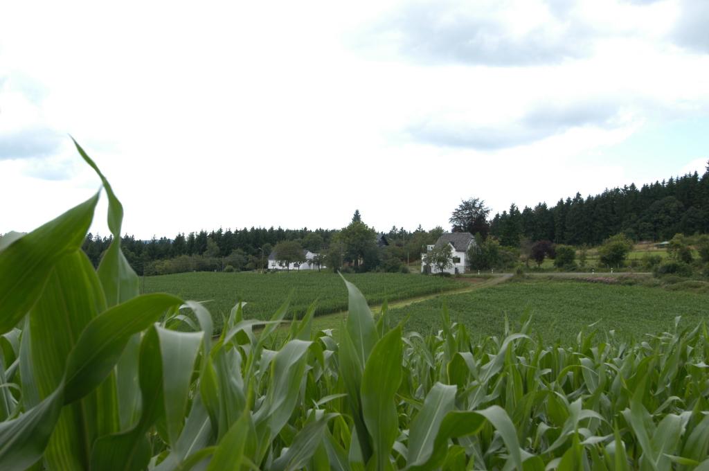 Gerndorferhöhe